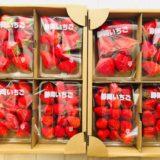 静岡県牧之原市 濃く甘いちご「紅ほっぺ」2.5kg以上