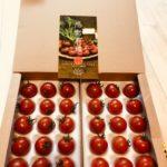 宮城県大崎市 トマトクイーン フルーティな味わいトマトの女王 700g